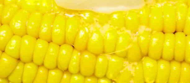Як зварити молоду кукурудзу, щоб була соковитою і м'якою
